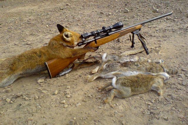 Fox_hunting_bunnies